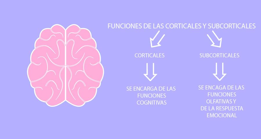 meditación-beneficios en el cerebro